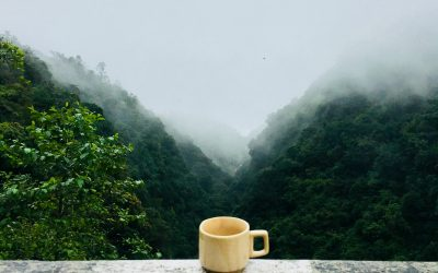 The Coffee Conundrum: A Proposed Life-Lengthening Mechanism