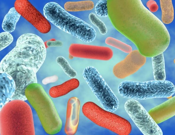 Psychobiotics, the Pharmacology of Probiotics, and Our Body's Naturally Innate Pharmacy